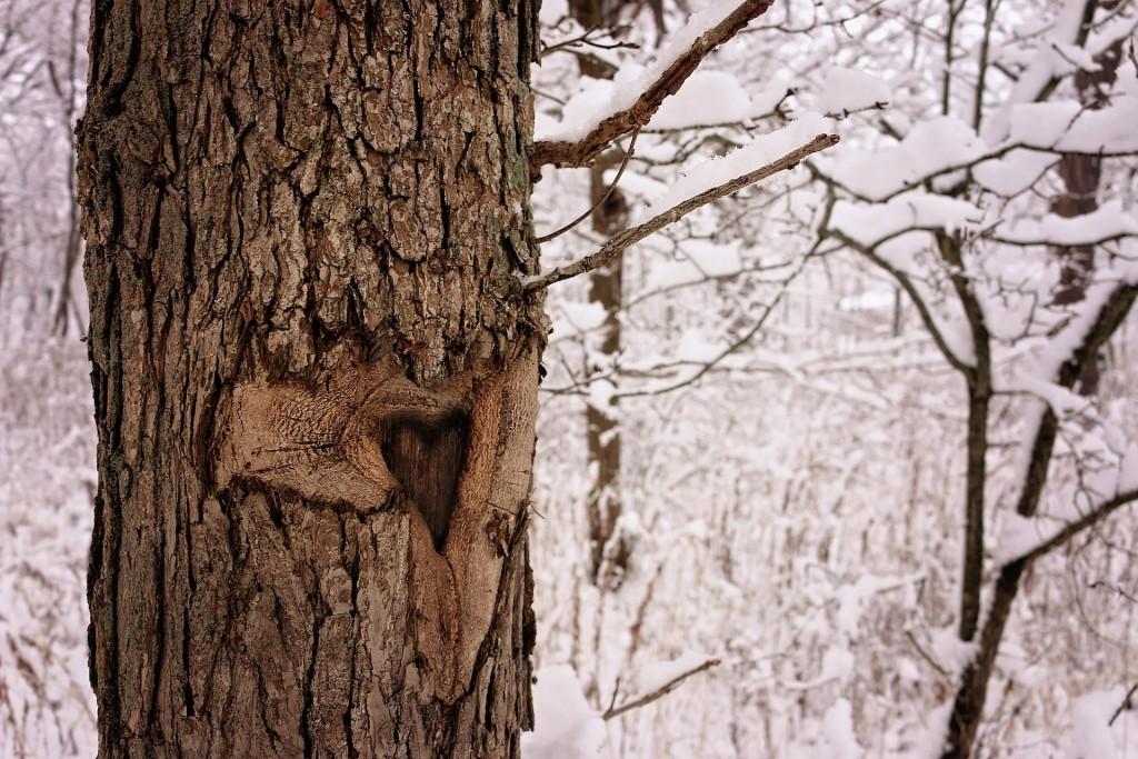 träd vinter kärlek